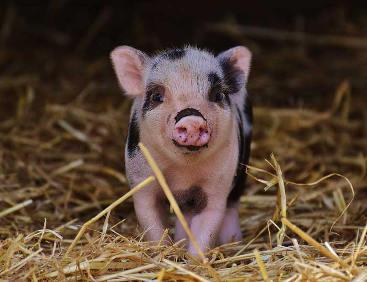 Vegane Ernährungsberatung - Aus Liebe zu Tieren