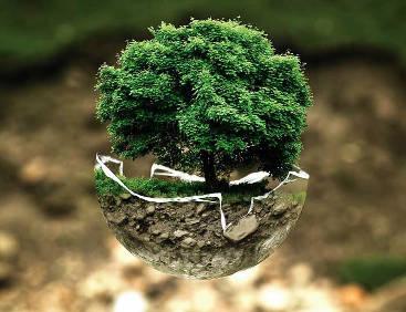 Vegane Ernährungsberatung  - Aus Liebe zur Umwelt
